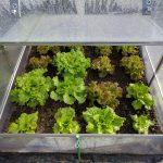 レタスを冷凍保存する方法!保存期間はどれくらい持つ?