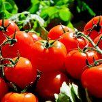 トマトの栄養は糖尿病に効果あり?おすすめのレシピをご紹介!