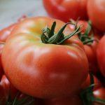 トマトスープの人気レシピ!キャベツを使っておいしく仕上げよう!