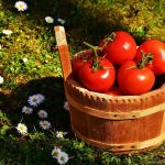 トマトの湯むきはなぜするの?離乳食はいつまで皮むきした方が良いのか?